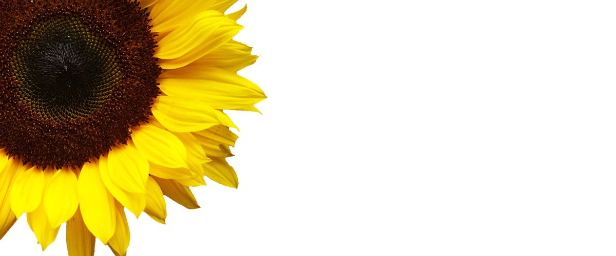 Free Sunflower Template